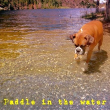 padle in the water