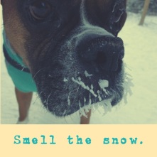 smell the snow