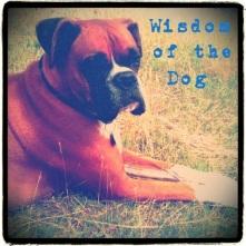 wisdom of the dog
